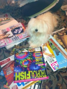 Piper helping Sort Magazines