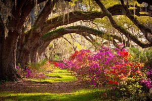 Wordless Wed Charleston photo